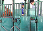 Curlin Faces Five in Dubai