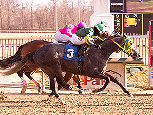 Cutty Shark wins an allowance optional claiming race at Laurel Park 01/30/2015
