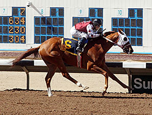 D E Lover wins the 2014 Dine Stakes.