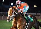 Da Big Hoss Sets Course Record in Turf Cup