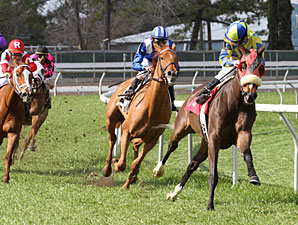 Daisy Devine Favored in Bayou Handicap