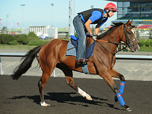 Imports Add Intrigue to Shadwell Turf Mile