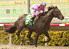 OBS Grad Dance With Fate Steps Up in Juvenile