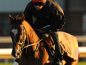 Dance and Dance works towards the Woodbine Mile.