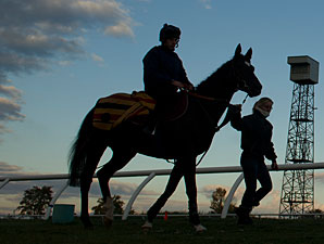 Dandino - Woodbine, October 8, 2012.
