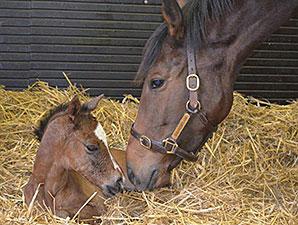 First foal for arc winner danedream