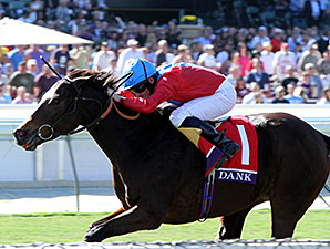 Dank wins the 2013 Breeders' Cup Filly and Mare Turf