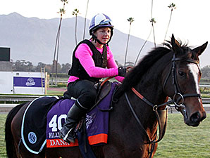 Dank - Breeders' Cup, October 30, 2014