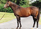 Danzig Sires 200th Stakes Winner
