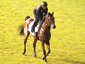 Keiichiro Yasuda trains Japan's Dasher Go Go who is in Singapore for the Kris Flyer Sprint.