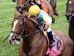 Dayatthespa wins the 2012 Queen Elizabeth II Challenge Cup.