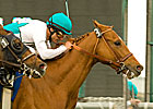 Daytona Scores in Arcadia Handicap