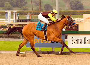 Sadler's Duo Tops Filly/Mare Sprint