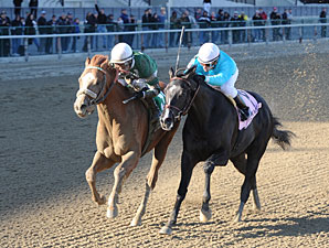 Declan's Warrior wins the 2013 Bay Shore.