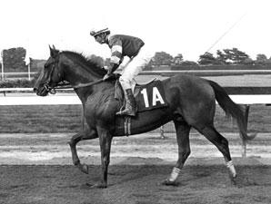 1983 Preakness Winner Deputed Testamony Dies