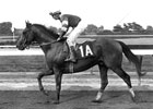 1983 Preakness Winner Deputed Testamony Dies