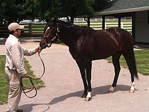 TOBA Breeding Clinic Takes Place in Lexington