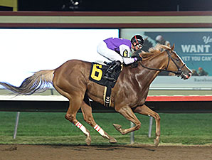 Diamond Joe wins the 2015 John Bullit Stakes.