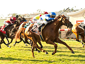 Dice Flavor wins the 2013 La Jolla.