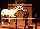 Moyglare Stud Lands Discreet Marq for $2.4M