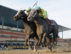 Pletcher Entrants Vie for Black-Eyed Susan
