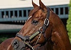 Distorted Humor Sires 100th Stakes Winner