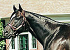 Dixie Union Euthanized