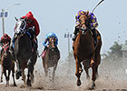 Full Field of Fillies to Contest Dogwood