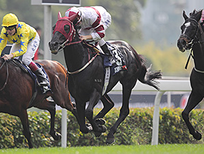 Dominant wins the Hong Kong Vase.