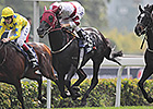 Dominant Upsets The Fugue in Hong Kong Vase