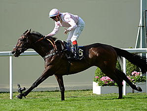 Domination wins the 2014 Ascot Stakes