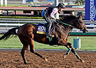 Don't Tell Sophia Tops Fall City Handicap