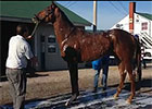 Kentucky Derby: Dortmund Gets a Bath