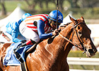 Dortmund Logs Final Work for SA Derby