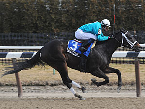 Dream Play wins the 2009 Dearly Precious.