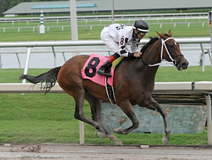Dreaming of Sophia wins the 2013 Cellars Shiraz Stakes.