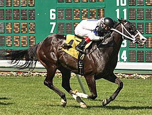Dreamsgonewild wins the John Mc Sorely Stakes.