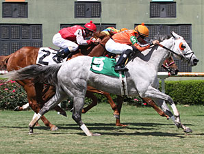 Drinking Fund wins the 2013 Honeymoon Stakes.