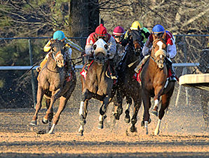 Drogue wins the 2014 Fifth Season Stakes