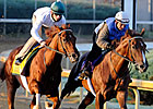 Drosselmeyer, Birdrun Tune Up for Mott