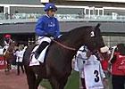 Dubai Gold Cup - Cavalryman
