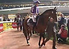 Dubai Sheema Classic - St Nicholas Abbey