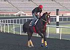 Dubai World Cup: Training 03/28/2013