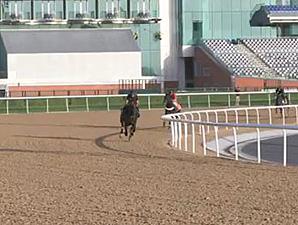 Dubai World Cup: Morning Training 03/24 Part 2