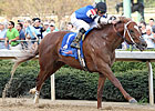 Duke of Mischief to Make Return at Gulfstream