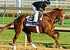 Steve Haskin&#39;s Derby Dozen 3/12/2012 