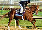 Bandaging Racehorses' Legs