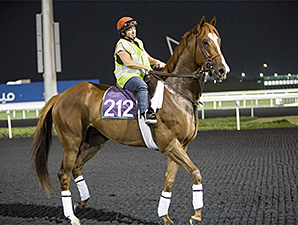 Dullahan, Little Mike in 'Good Shape' in UAE
