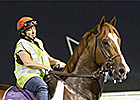Dullahan, Little Mike Sharp in Meydan Drills