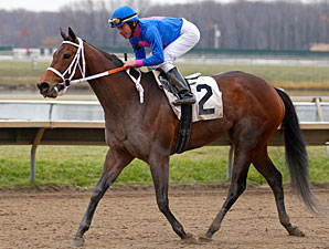 D'wild Ride wins the 2010 Cornucopia.